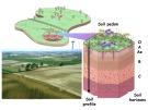 Bài giảng Khoa học đất (Ngành Quản lý đất đai) - Chương 7 (2): Tầng đất