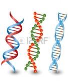 Bài 9 - Thực hành: Xem phim về cơ chế nhân đôi ADN, phiên mã và dịch mã