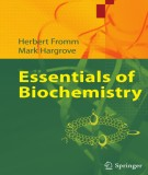 Ebook Essentials of biochemistry: Part 1