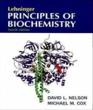Ebook Lehninger principles of biochemistry (4th edition): Part 1