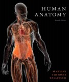 Ebook Human anatomy (7th edition): Part 2