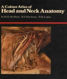 Ebook Clinical atlas of head and neck anatomy: Part 1