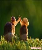 3 câu chuyện tình yêu của ốc sên