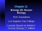 Lecture Biology 25 (Human Biology): Chapter 11 - Prof. Gonsalves