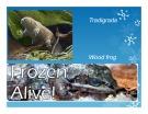 Bài giảng Kỹ thuật đông lạnh tế bào động vật