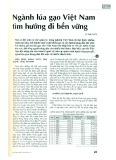 Ngành lúa gạo Việt Nam tìm hướng đi bền vững