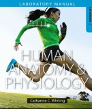 Ebook Human anatomy & physiology (1st edition): Part 2