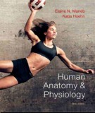 Ebook Human anatomy & physiology (9th edition): Part 1