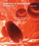 Ebook Principles of anatomy and physiology (12th edition): Part 1