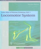 Ebook Color atlas and textbook of human Vol 1 - Locomotor system: Part 2
