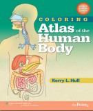 Ebook Atlas of the human body: Part 2