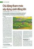 Chủ động tham mưu xây dựng cánh đồng lớn