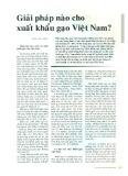Giải pháp nào cho xuất khẩu gạo Việt Nam?