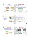 Bài giảng Chương 2: Cấu trúc và chức năng các đại phân tử sinh học