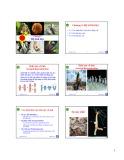 Bài giảng Động vật học và phân loại động vật: Chương 9 - Nguyễn Hữu Trí