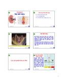 Bài giảng Động vật học và phân loại động vật: Chương 8 - Nguyễn Hữu Trí