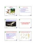 Bài giảng môn Sinh học động vật: Chương 2 - Nguyễn Hữu Trí