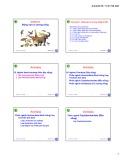 Bài giảng Động vật học và phân loại động vật: Chương 11 - Nguyễn Hữu Trí