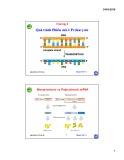 Bài giảng Sinh học phân tử: Chương 4 - Nguyễn Hữu Trí