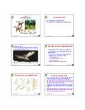 Bài giảng Động vật học và phân loại động vật: Chương 2 - Nguyễn Hữu Trí