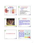Bài giảng môn Sinh học động vật: Chương 10 - Nguyễn Hữu Trí