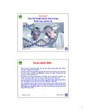 Bài giảng Sinh học phân tử: Chương 8 - Nguyễn Hữu Trí