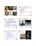 Bài giảng môn Sinh học động vật: Chương 11 - Nguyễn Hữu Trí