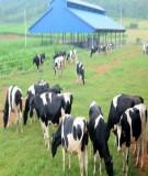 Báo cáo: Những nét mới trong chăn nuôi bò sữa hiện nay ở Nghĩa Đàn