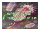 Bài giảng Bài 1: Hình thể cấu trúc vi khuẩn - Đại cương miễn dịch - Vaccin - Huyết thanh