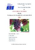 Tiểu luận Công nghệ sau thu hoạch: Xây dựng quy trình công nghệ xử lý sau thu hoạch đối với Nho