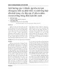 Ảnh hưởng của vi khuẩn Agrobacterium rhizogenes đến sự phát triển và sinh tổng hợp alkaloid trong cây dừa cạn (Catharanthus roseus) trồng trong điều kiện khí canh