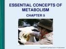 Lecture Microbiology - Chapter 5: Essential concepts of metabolism