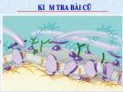 Bài giảng Sinh học 10 phần 1 chương 1 bài 11: Vận chuyển các chất qua màng sinh chất