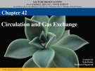 Lecture AP Biology - Chapter 42B: Circulation and gas exchange