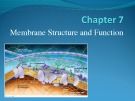 Lecture AP Biology - Chapter 7: Membrane structure and function