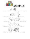 Từ vựng chủ đề con vật phần 2