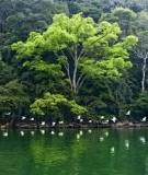 Chi trả dịch vụ môi trường rừng tại Việt Nam - Kết nối chủ rừng và người sử dụng dịch vụ môi trường rừng