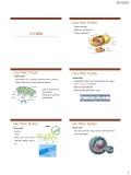 Bài giảng Đại cương ký sinh trùng: Vi nấm