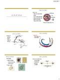 Bài giảng Đại cương ký sinh trùng: Giun ký sinh