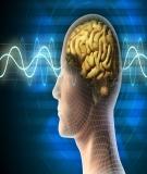 Các khối u nguyên phát và di căn của hệ thần kinh