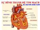 Bài giảng Sự hình thành hệ tim mạch - BS. Nguyễn Dũng Tuấn