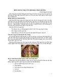 Biến chứng thận của bệnh đái tháo đường
