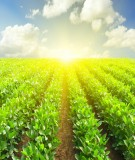 Tái cơ cấu ngành nông nghiệp nhằm nâng cao năng lực cạnh tranh và phát triển bền vững trong bối cảnh mới