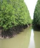 Báo cáo Nghiên cứu chuẩn bị xây dựng dự án phục hồi và quản lý bền vững rừng phòng hộ tại Việt Nam