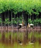 Dịch vụ hệ sinh thái  môi trường rừng