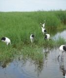 Báo cáo Tổng quan về áp dụng tiếp cận hệ sinh thái vào các khu đất ngập nước tại Việt Nam