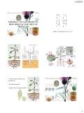 Bài giảng Chương 5: Sự vận chuyển và phân phối các chất hữu cơ trong cây