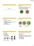 Bài giảng Vi sinh vật - Virut