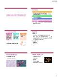 Bài giảng Vi sinh vật -  Vi khuẩn đường ruột