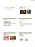 Bài giảng Vi sinh vật -  Vi khuẩn gây bệnh đường sinh dục